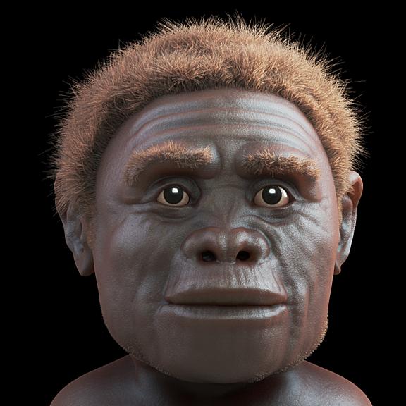 Homo floresensis, o Hobbit