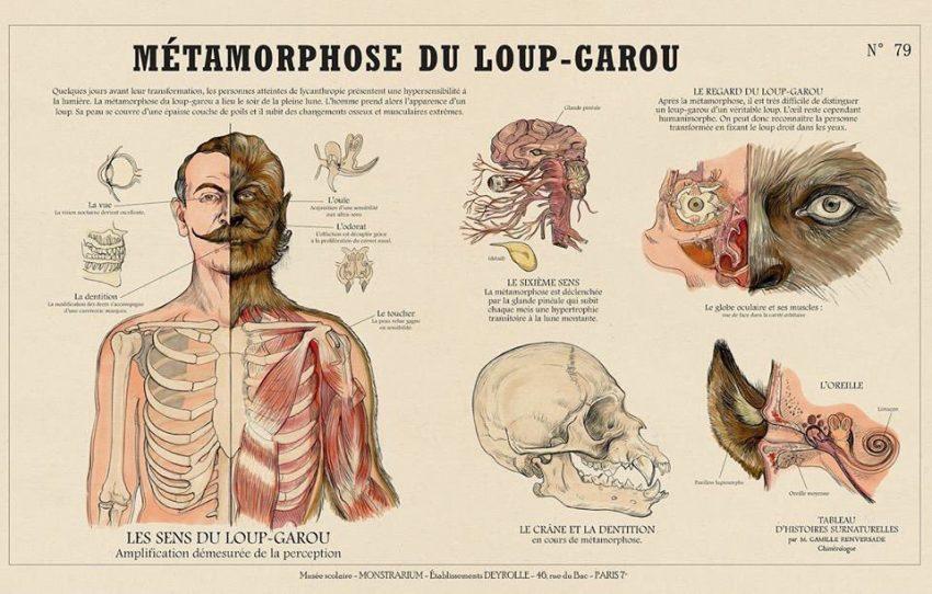 Métamorphose du Loup-Garou (Metamorfosi del Lupo Mannaro), Camille Renversade