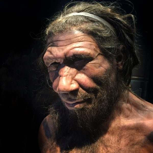 homo neanderthalensis modello