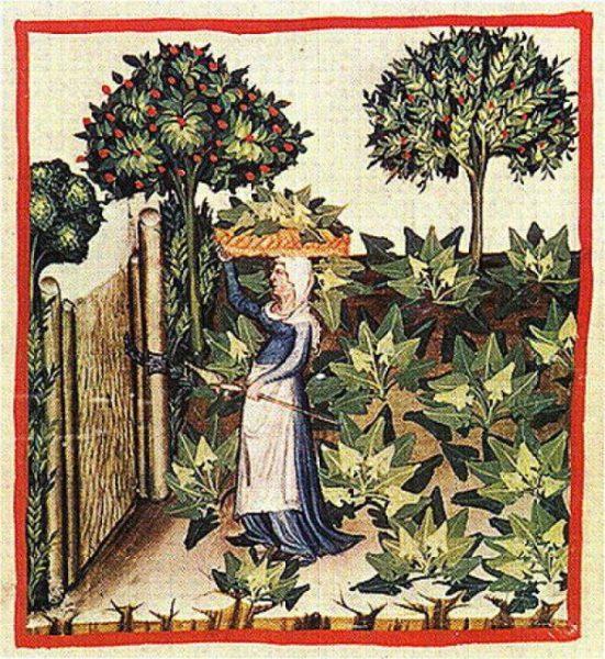 donna con erbe