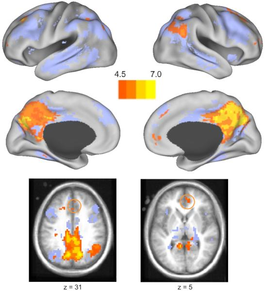 Reading Stories Activates Neural Representations of Visual and Motor Experiences